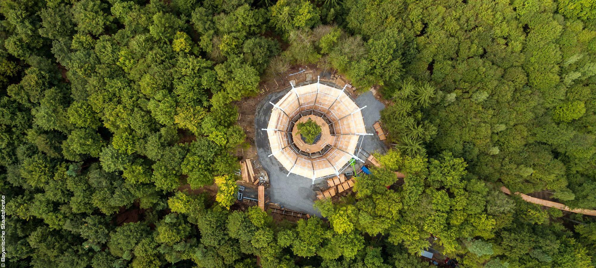 Tour d'arbre - Baumwipfelpfad